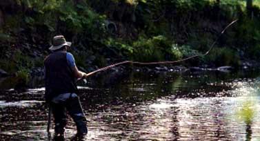 pescamosca