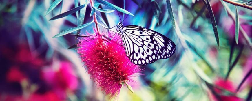 fabula de la mariposa